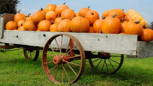 Pumpkin Haul Jigsaw Puzzle