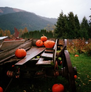 Pumpkin Wagon Jigsaw Puzzle