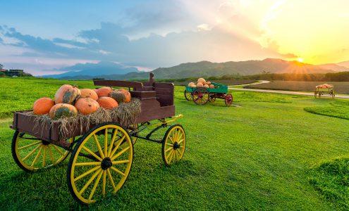 Pumpkin Wagons Jigsaw Puzzle