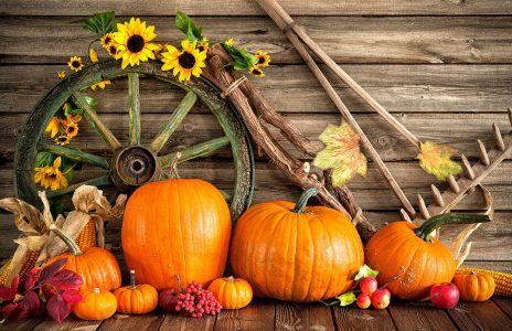 Pumpkins and Wheel Jigsaw Puzzle
