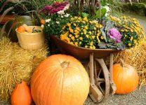 Pumpkins and Wheelbarrow