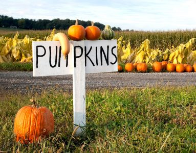 Pumpkins for Sale Jigsaw Puzzle