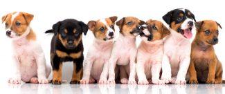 Puppy Row
