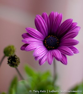 Purple Striped Flower Jigsaw Puzzle
