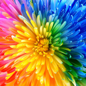 Rainbow Bloom Jigsaw Puzzle