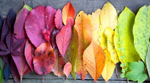 Rainbow of Leaves Jigsaw Puzzle