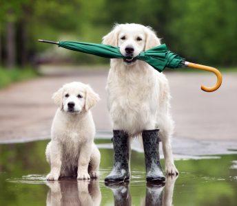 Rainy Day Dogs Jigsaw Puzzle