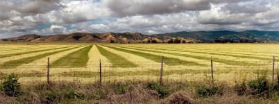 Raked Hay