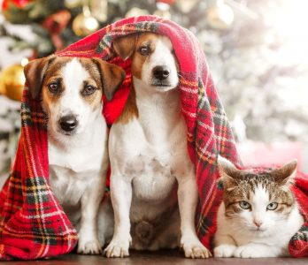 Ready for Christmas Jigsaw Puzzle