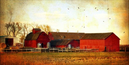 Red Barns Jigsaw Puzzle