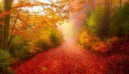 Red Carpet Trail