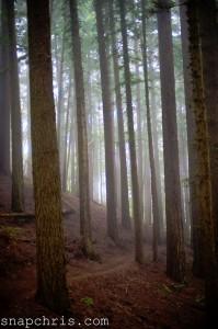 Redwood Grove Jigsaw Puzzle