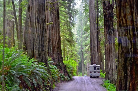 Redwood Road Jigsaw Puzzle