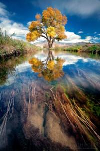 Reflecting Tree Jigsaw Puzzle