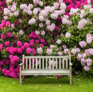 Rhododendron Garden Jigsaw Puzzle