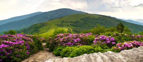 Rhododendron Trail Jigsaw Puzzle