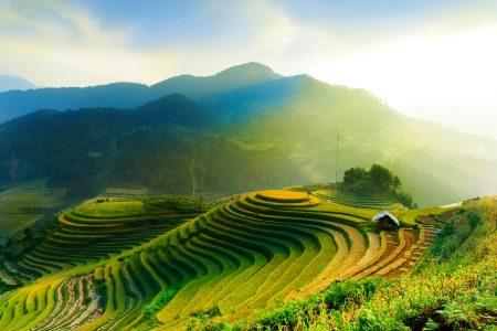 Rice Field Jigsaw Puzzle