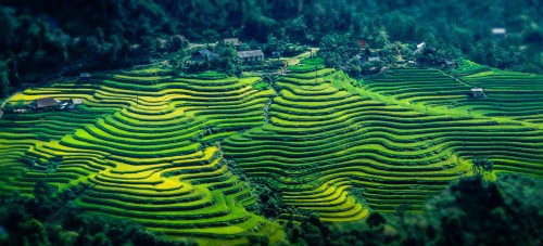 Rice Terraces Jigsaw Puzzle