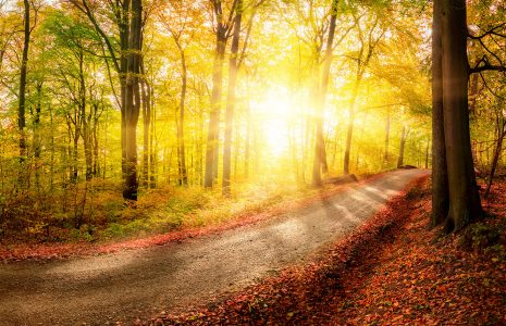 Road in the Woods Jigsaw Puzzle