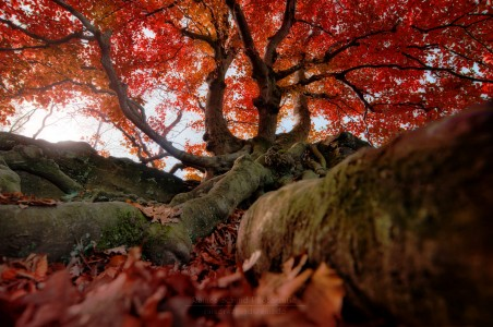 Roots to Limbs Jigsaw Puzzle
