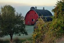 Rural Morning