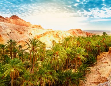 Sahara Oasis Jigsaw Puzzle