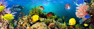 Sea Coral Scene
