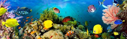 Sea Coral Scene Jigsaw Puzzle