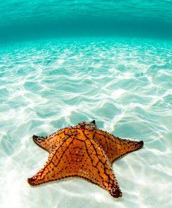 Sea Star Jigsaw Puzzle