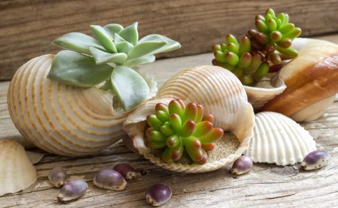 Seashell Succulents Jigsaw Puzzle