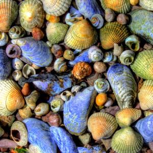 Seashells Jigsaw Puzzle