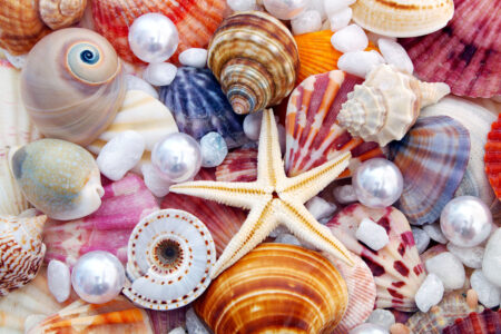 Seashells and Pearls Jigsaw Puzzle