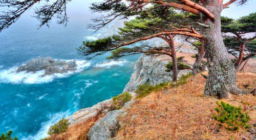 Seaside Cedars Jigsaw Puzzle