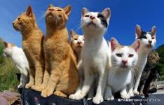 Seto Island Cats