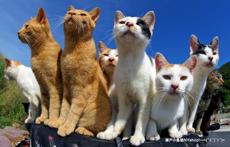 Seto Island Cats Jigsaw Puzzle