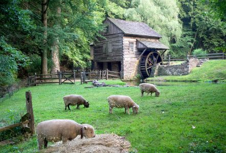 Sheep and Mill Jigsaw Puzzle