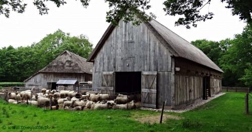 Sheep Barn Jigsaw Puzzle