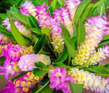 Siam Tulips Jigsaw Puzzle