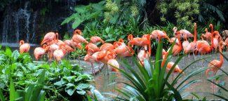 Singapore Flamingos
