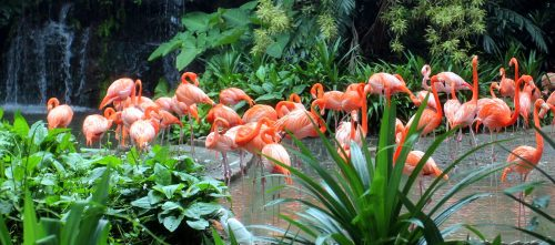 Singapore Flamingos Jigsaw Puzzle