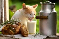 Sip of Milk
