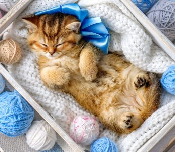 Sleeping in Yarn Jigsaw Puzzle