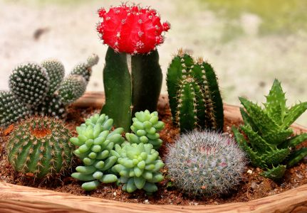 Small Cacti Jigsaw Puzzle