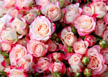 Smell the Roses Jigsaw Puzzle