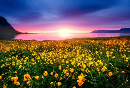 Snaefellsnes Wildflowers Jigsaw Puzzle