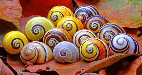 Snail Shells Jigsaw Puzzle