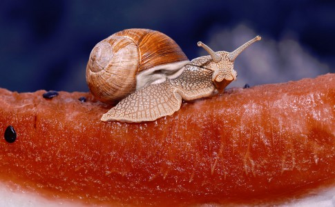 Snail Snack Jigsaw Puzzle