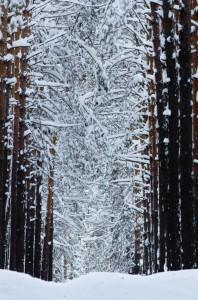 Snow Canopy Jigsaw Puzzle