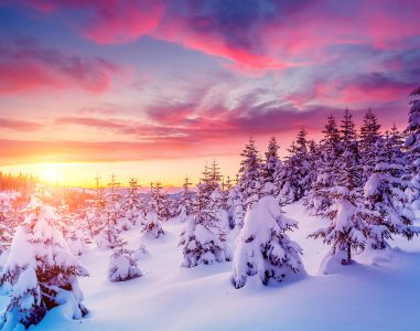 Snow Covered Pines Jigsaw Puzzle