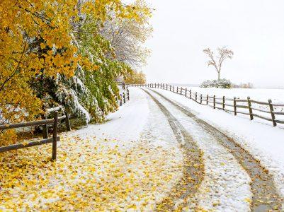 Snowy Drive Jigsaw Puzzle